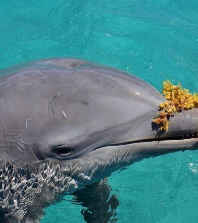 Golfinhos também escolhem amigos por interesses em comum