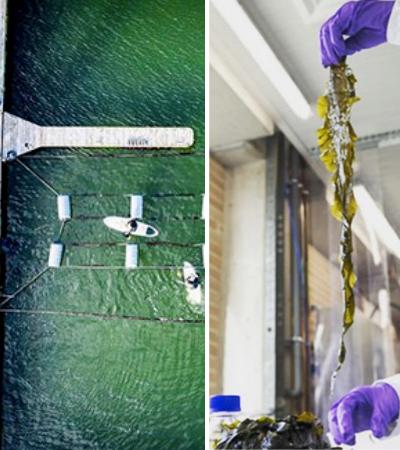 Eles criaram uma fazenda de algas para filtrar poluição em sua praia favorita