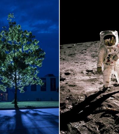 Árvores de sementes que orbitaram a Lua em 1977 ainda vivem na Terra; saiba onde
