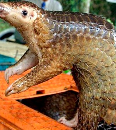Coronavírus: animal silvestre em busca de comida pode ter iniciado surto