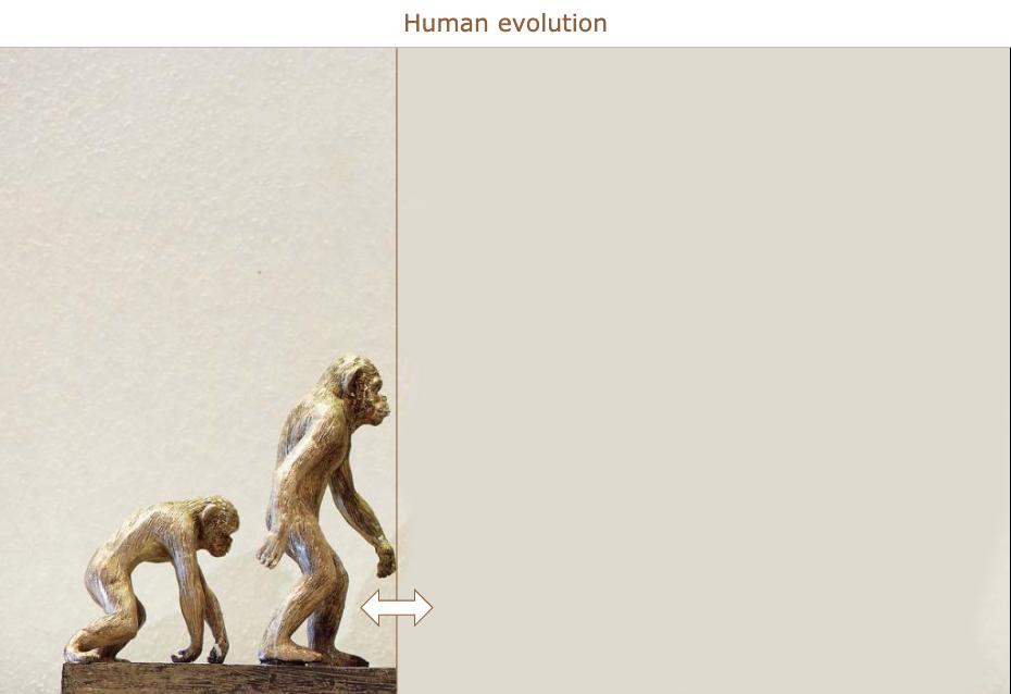 Evolution lesson for primary school