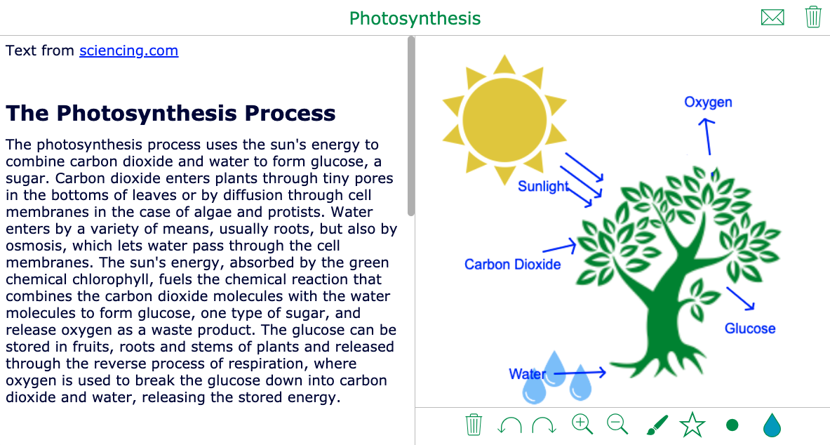 Whiteboard exercise photosynthesis