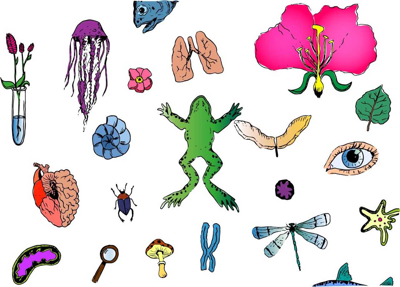 Lesson background image for biology