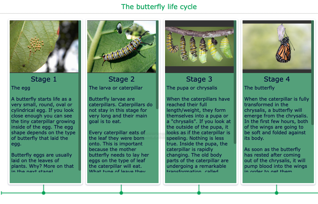 Timeline of the life cycle butterfly
