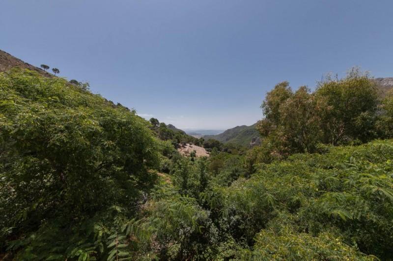Pool views Finca Casares-8