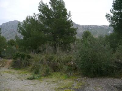 plot in Betlem, Arta, Mallorca