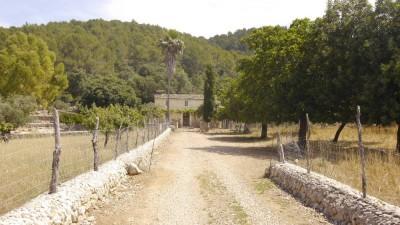 703532 - Rustic Finca For sale in Campanet, Mallorca, Baleares, Spain