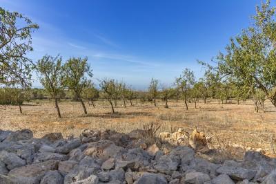 792700 - Plot For sale in Marratxí, Mallorca, Baleares, Spain