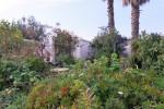 1711-garden4