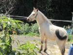 1653-horse4