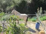 1653-horse