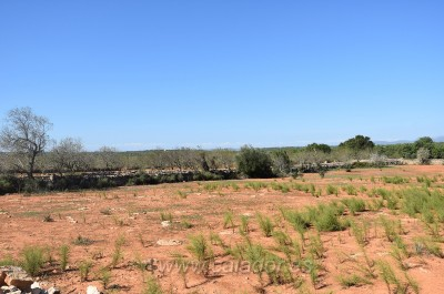 776215 - Land For sale in Cas Concos, Felanitx, Mallorca, Baleares, Spain