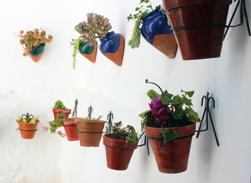 Pueblo-Flowers
