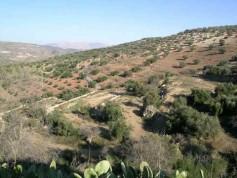 329340 - Land for sale in Colmenar, Málaga, Spain
