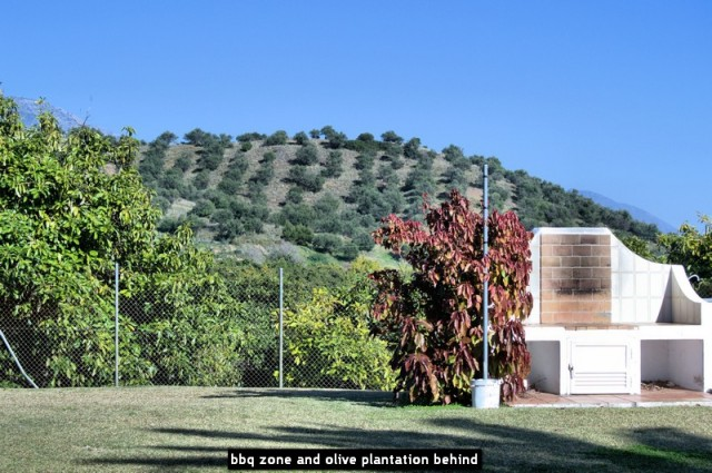 bbq zone and olive plantation behind