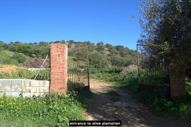 entrance to olive plantation