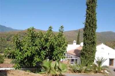 385833 - Finca en venta en Estepona, Málaga, España