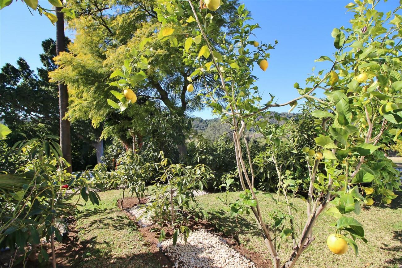 Villa for sale close to Puerto Banus Spain (39) (Large)