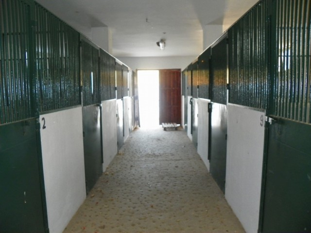 Inside stables