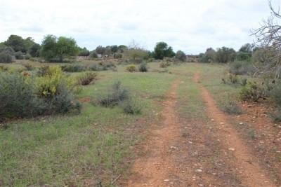 742031 - Land For sale in Llucmajor, Mallorca, Baleares, Spain