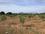 Rustic plot of land for sale between Pollensa and Puerto de Pollensa