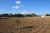 Plot of land in the countryside of Pollensa, mid way between Pollensa and Puerto Pollensa Bay