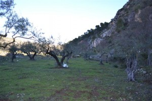 Superb Plot of land in Monda nr Marbella