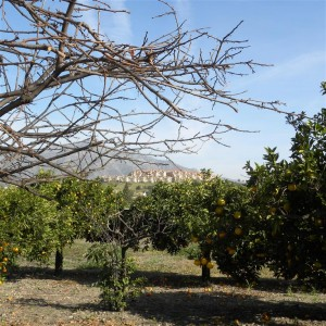 Rustic finca in large plot in San Pedro Alcantara outskirts
