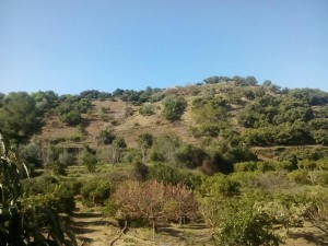 Land for sale in Coin