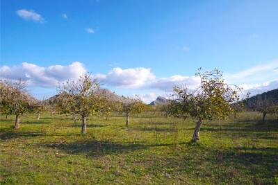 794696 - Parcela en venta en Pollença, Mallorca, Baleares, España