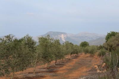 795018 - Land For sale in Inca, Mallorca, Baleares, Spain