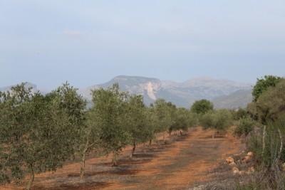 798515 - Land For sale in Inca, Mallorca, Baleares, Spain