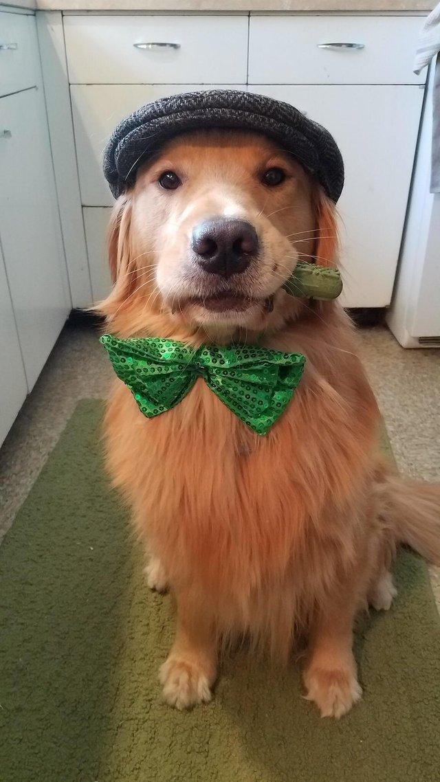 A dog named Murphy