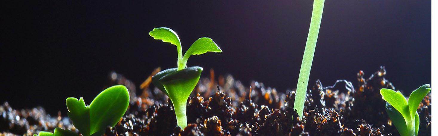 växt som gror 1920x600 2
