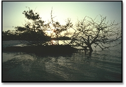 Dense mangrove islands surround the Isles of Capri
