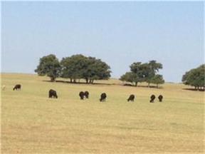 Farm & Ranch Sold: CR 156