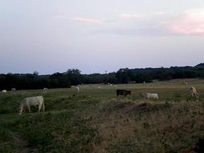 Farm & Ranch Sold: CR 127