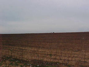 Farm Ranch Hunting  Sold: FM 2530