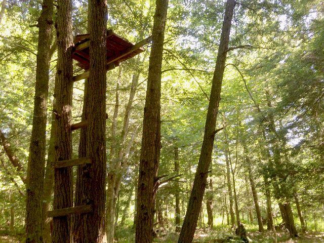 4880 TreeStand