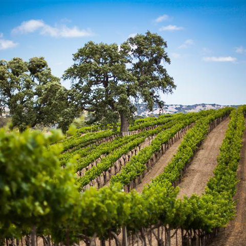 Homes for Sale in Paso Robles, CA