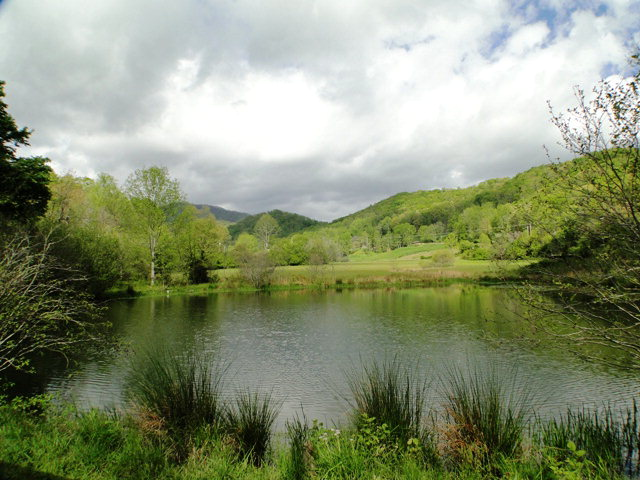 Check out this POND!  Amazing land for sale in Franklin NC, Bald Head John Becker, Keller Williams