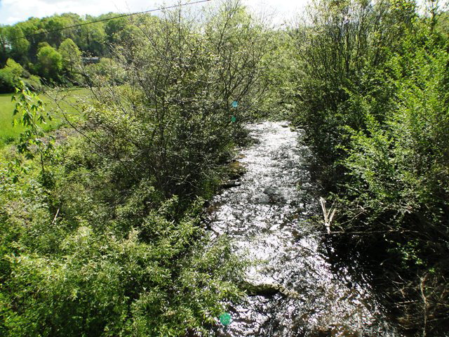 1,065 feet of Allison Creek frontage!  Smokey Mountain Land for Sale, Blue Ridge Mountain Property