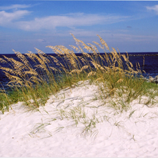 Waterfront Lots For Sale in Gulf Shores AL