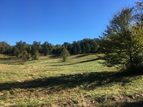 Leitchfield KY Residential Lots & Land For Sale: $8,500