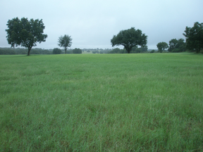 Land/Acreage SOLD!: 1814 S. FM 56