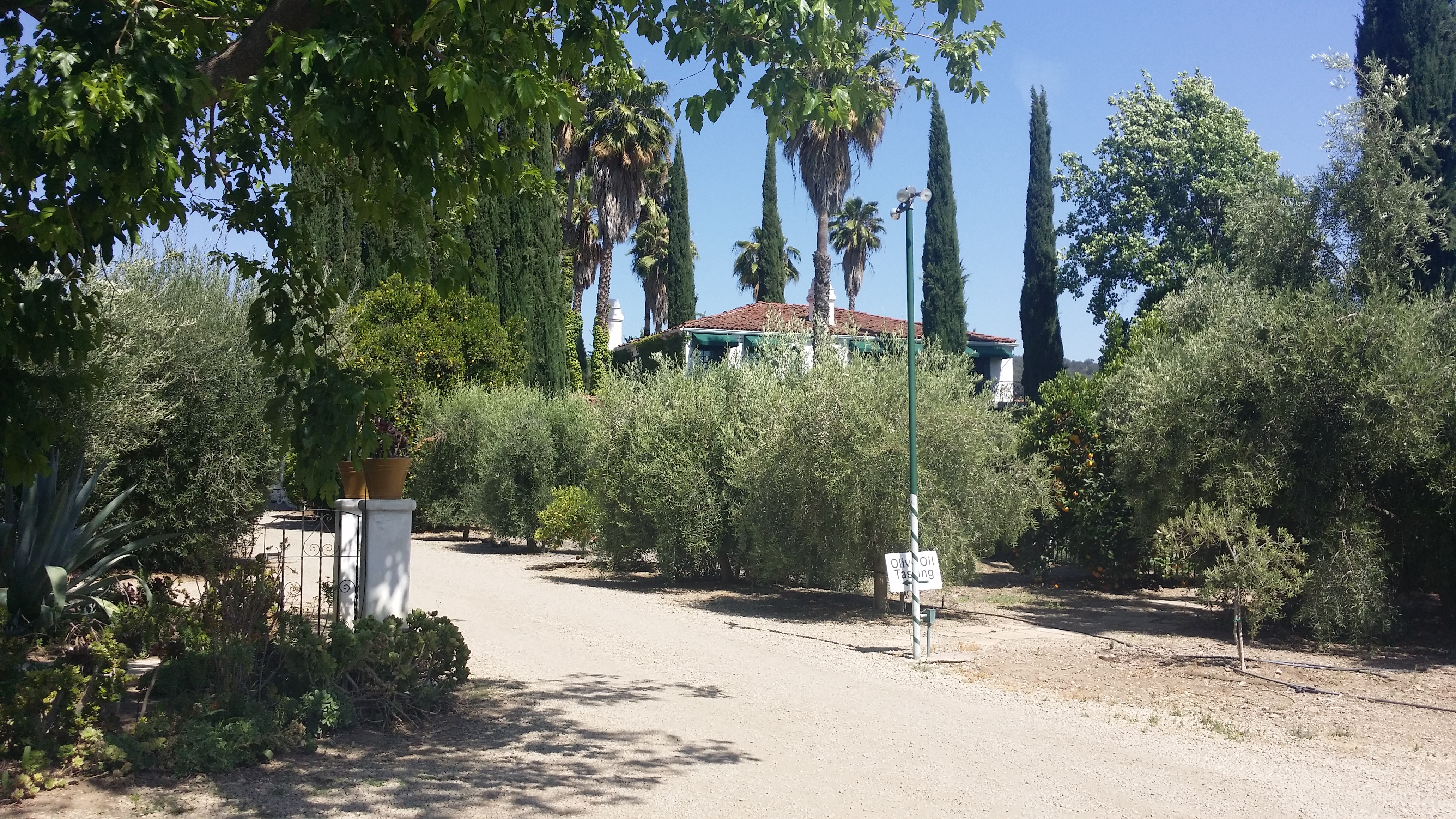 Olive Growing Estate in Ojai CA