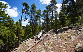 Idaho Springs CO Residential Lots & Land Active: $329,000 List Price