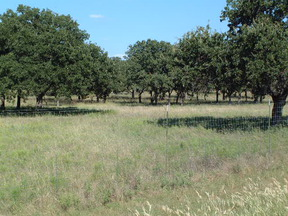 601.81 AC Ranch For Sale: CR 260