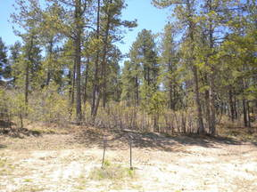 Lots And Land : 7976 Monarch Rd