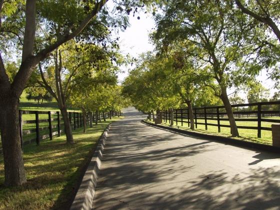 Fallbrook Ca Real Estate Horse Property